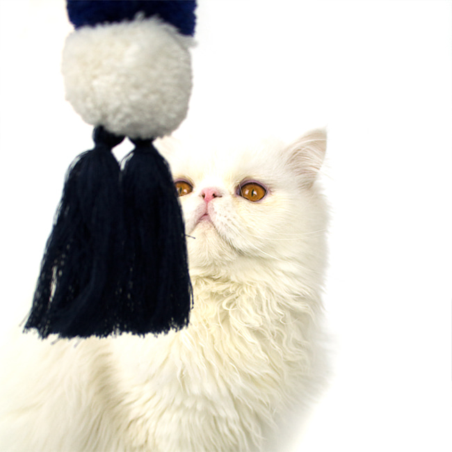 seoul-pet-COTTON BALL TOY [BLUE]♡寵物配件