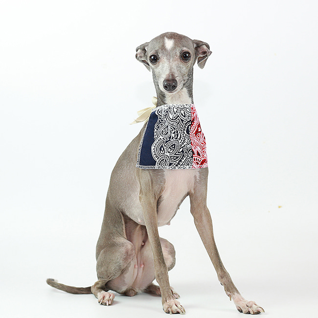 seoul-pet-PAISLEY SCARF [NAVY/RED]♡寵物配件